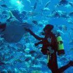 The Dubai Aquarium launches speciality dive package